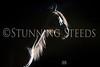 0StunningSteedsPhoto-HR-1820tu