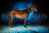 0StunningSteedsPhoto-HR-2616-tu