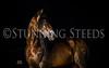 StunningSteedsPhoto-HR-2084