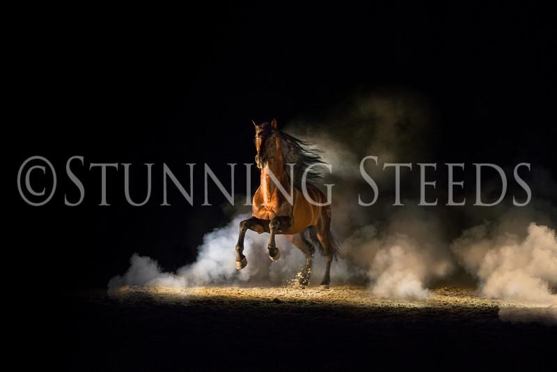 0StunningSteedsPhoto-HR-2239-tu