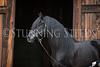 StunningSteedsPhoto-HR-2856