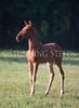 StunningSteedsPhoto-HR-2899