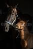 StunningSteedsPhoto-HR-2885