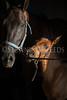 StunningSteedsPhoto-HR-2884