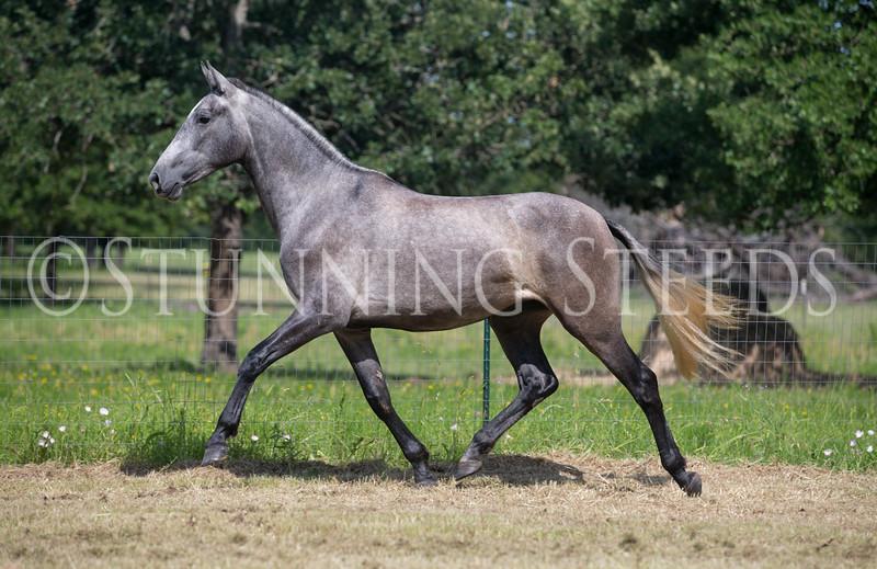 StunningSteedsPhoto-HR-3751
