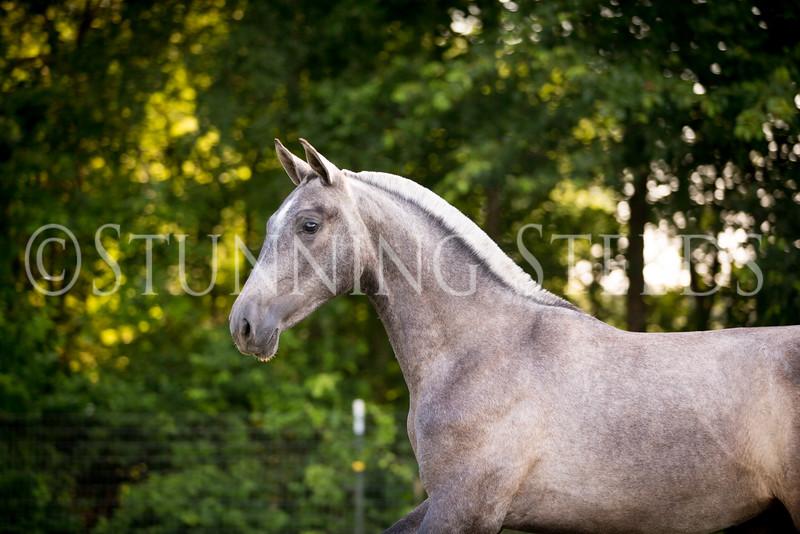 StunningSteedsPhoto-HR-5439