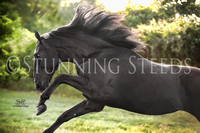 StunningSteedsPhoto-0356tu
