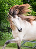 StunningSteedsPhoto-HR-5802-2