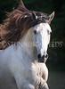 StunningSteedsPhoto-HR-5139