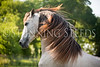 StunningSteedsPhoto-HR-5228