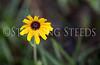StunningSteedsPhoto-HR-3127