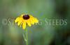 StunningSteedsPhoto-HR-3128
