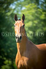 StunningSteedsPhoto-HR-4722