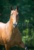 StunningSteedsPhoto-HR-4745