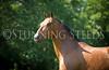 StunningSteedsPhoto-HR-4720
