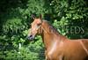 StunningSteedsPhoto-HR-4737
