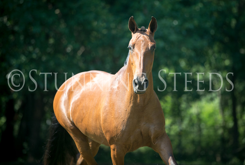 StunningSteedsPhoto-HR-4746
