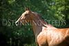 StunningSteedsPhoto-HR-4718