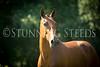 StunningSteedsPhoto-HR-4725