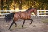 0StunningSteedsPhoto-HR-8465