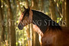 0StunningSteedsPhoto-HR-8065