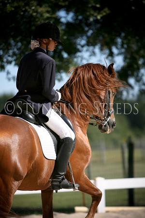Lentisco under saddle