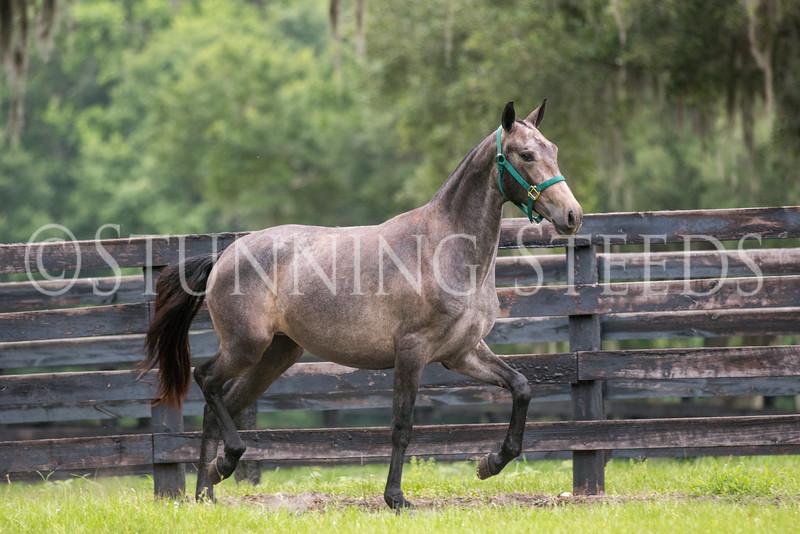 StunningSteedsPhoto-HR-5388