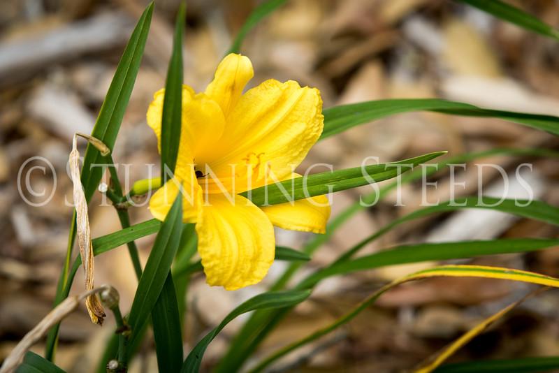 StunningSteedsPhoto-HR-6172