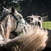 StunningSteedsPhoto-8881
