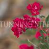 StunningSteedsPhoto-HR-6170