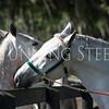 StunningSteedsPhoto-8895