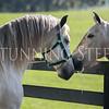 StunningSteedsPhoto-8857