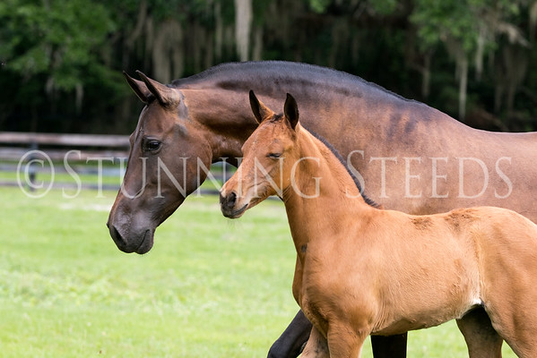 IRIS MC by Tortolillo out of Valentina MC by Ofendido VII with filly by Mercurio MC