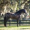 StunningSteedsPhoto-8330
