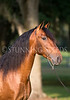 StunningSteedsPhoto-HR-4849