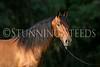 StunningSteedsPhoto-HR-4882