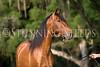 StunningSteedsPhoto-HR-4863