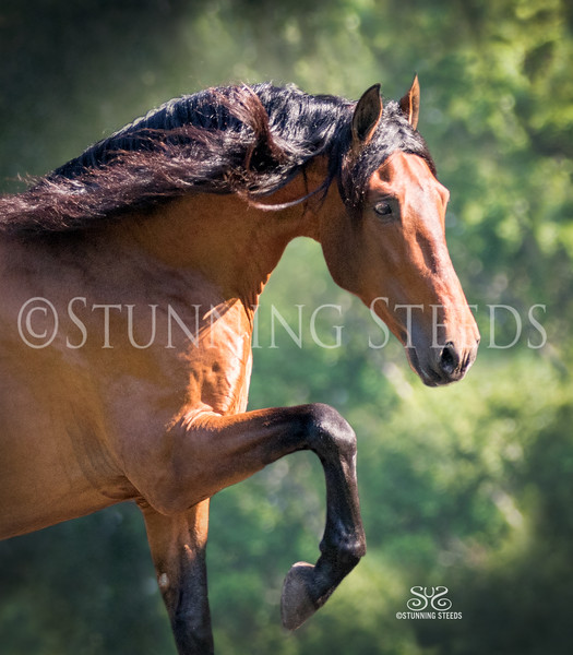 StunningSteedsPhoto-HR-3820crp