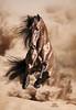 StunningSteedsPhoto-NotorioMC-8453-clipped-ART