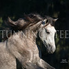 StunningSteedsPhoto-5017-tu