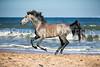 StunningSteedsPhoto-HR-BEACH