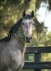 StunningSteedsPhoto-HR-4036