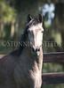 StunningSteedsPhoto-HR-4030