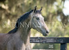 StunningSteedsPhoto-HR-4034