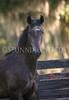 StunningSteedsPhoto-HR-4326