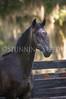 StunningSteedsPhoto-HR-4323