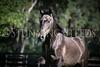 StunningSteedsPhoto-HR-4239
