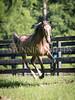 StunningSteedsPhoto-HR-4092