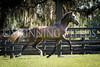StunningSteedsPhoto-HR-4144