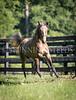 StunningSteedsPhoto-HR-4094